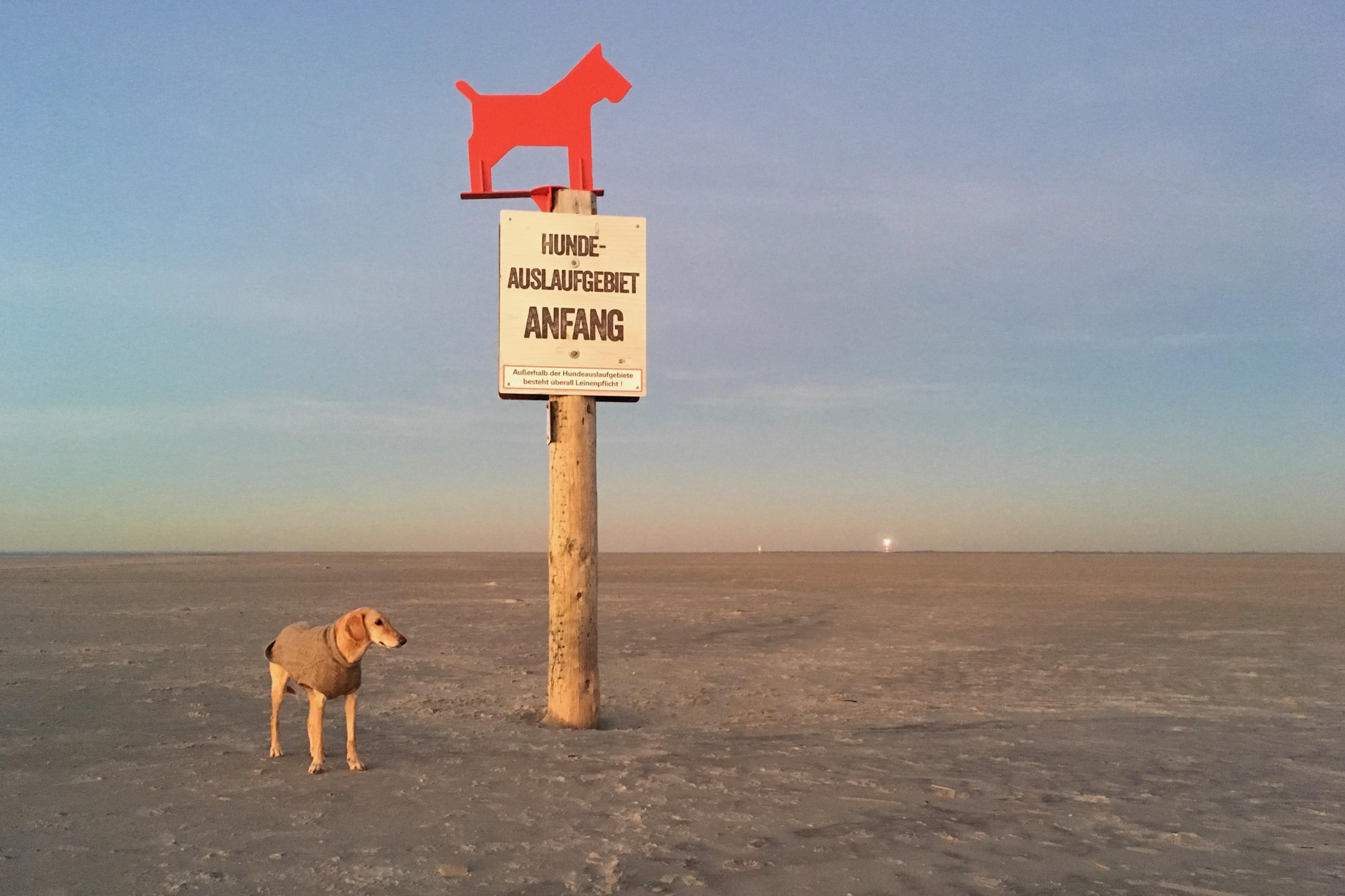 Hundestrand